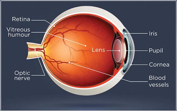 Digital Retinal Imaging | Optometry | Stoney Creek | OCT