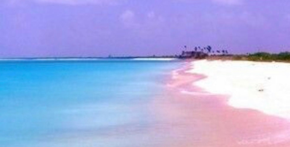 Pink Sands Yankee (Type)