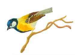 Illustration Naturstudie Bilderbuch