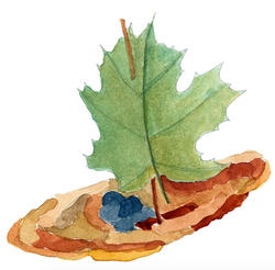 Illustration Naturbasteln Kinderbuch