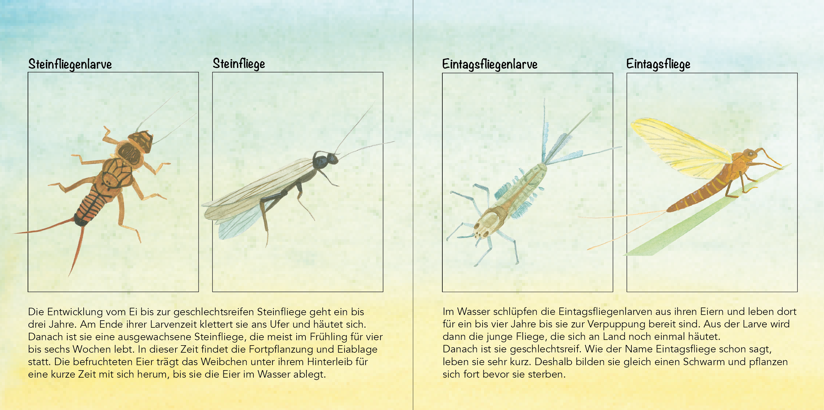 Einblick Kinderbuch, Illustrationen