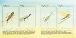 Einblick Kinderbuch, Illustrationen