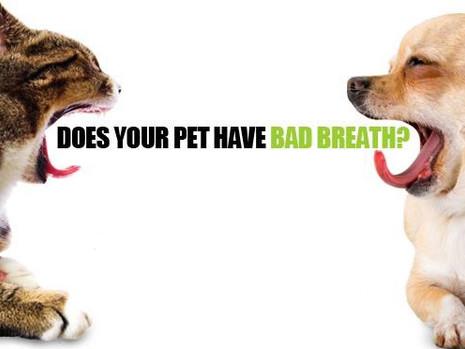 Γιατί μυρίζει η αναπνοή του κατοικιδίου μου;