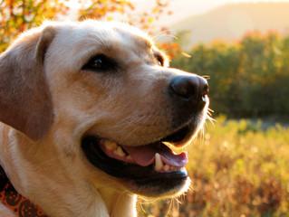 Συμπτώματα καρδιακής ανεπάρκειας στον σκύλο