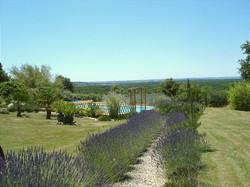 Lavender Path to Pool