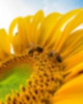 beautiful-bees-bloom-772571.jpg