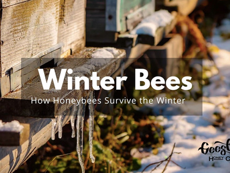 Winter bees: How honeybees survive the winter