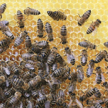 All about Beeswax