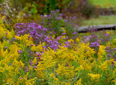 Fall Flowers for Bees