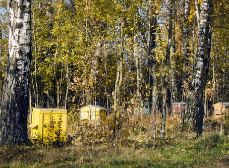 Autumn in the Beehive