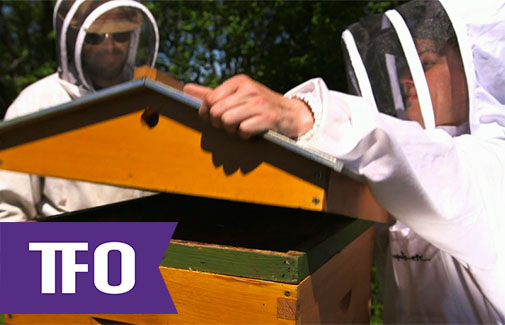 TFO Gees Bees: Hives for Hire