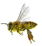 Bees%2520flying%2520to%2520to%2520the%25