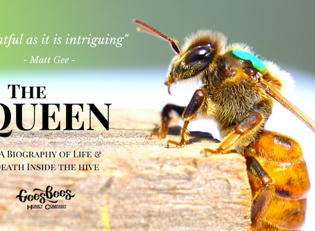 The Queen Bee: her birth, life and death