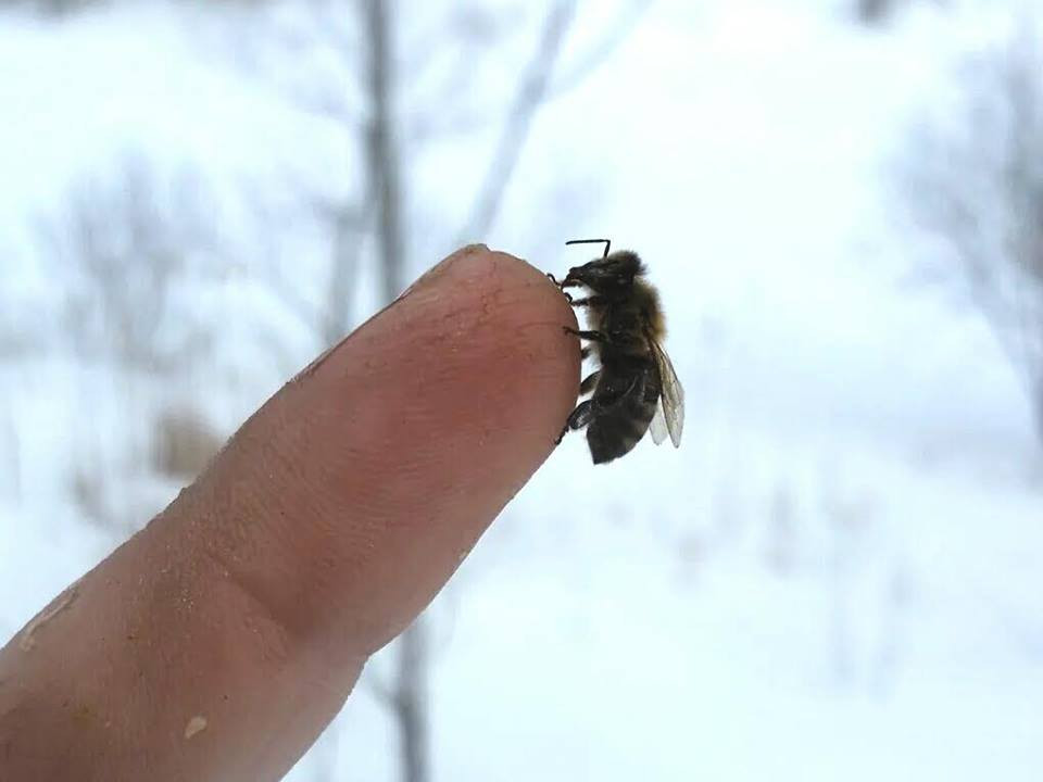 Little bee saying hello on this fine winter's day