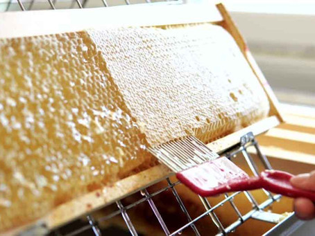 How is honey harvested?