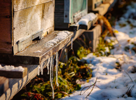 Top 5 Questions about Honeybees in Winter