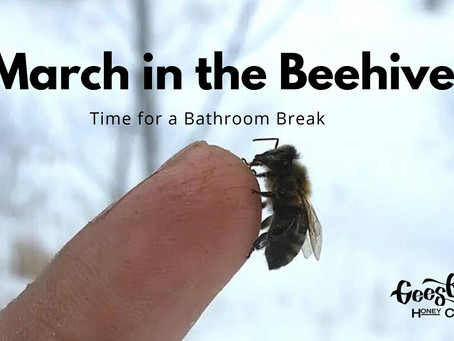 March in the Beehive = Time for a Bathroom Break