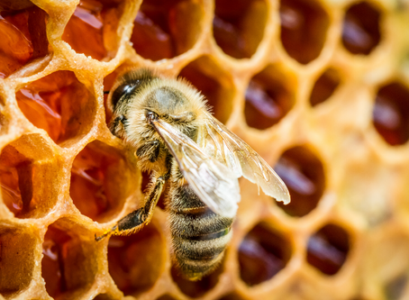 How is Honey Made? It all starts with the flowers