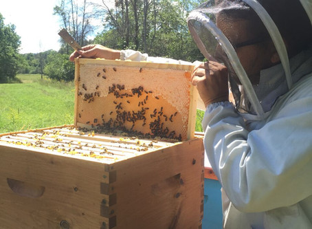 The Anatomy of the Beehive
