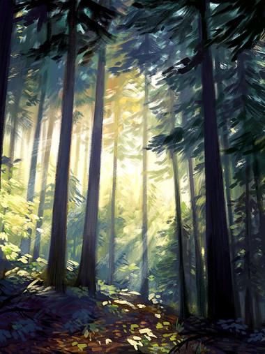 foreststudy7 web.jpg