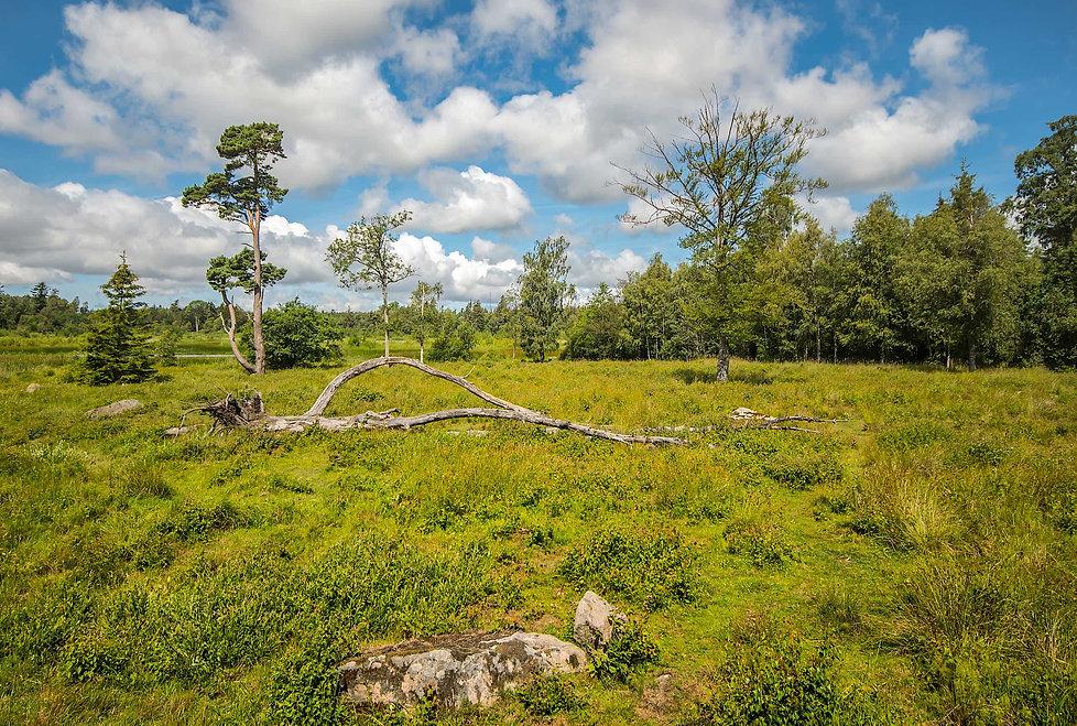 Bastmose, Almindingen (foto: Rune Engelbreth Larsen)