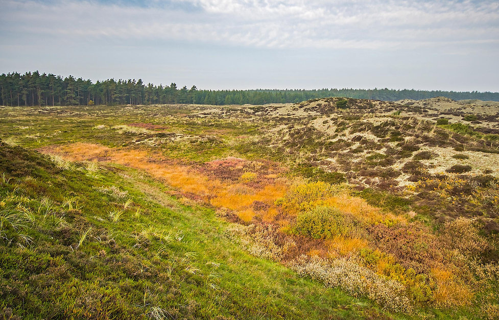 Lysåbne arealer syd for Udholm Mose (foto: Rune Engelbreh Larse)