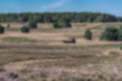 Hestevogn på Lüneburge Heide (foto: Rune Engelbreth Larsen)
