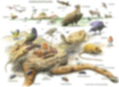 Kadaverfauna. Død i naturen giver liv til naturen