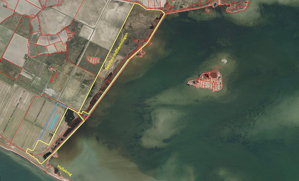 Saksfjed-Hyllekrog reservat – kort over hegnslinjen (Fugleværnsfonden)