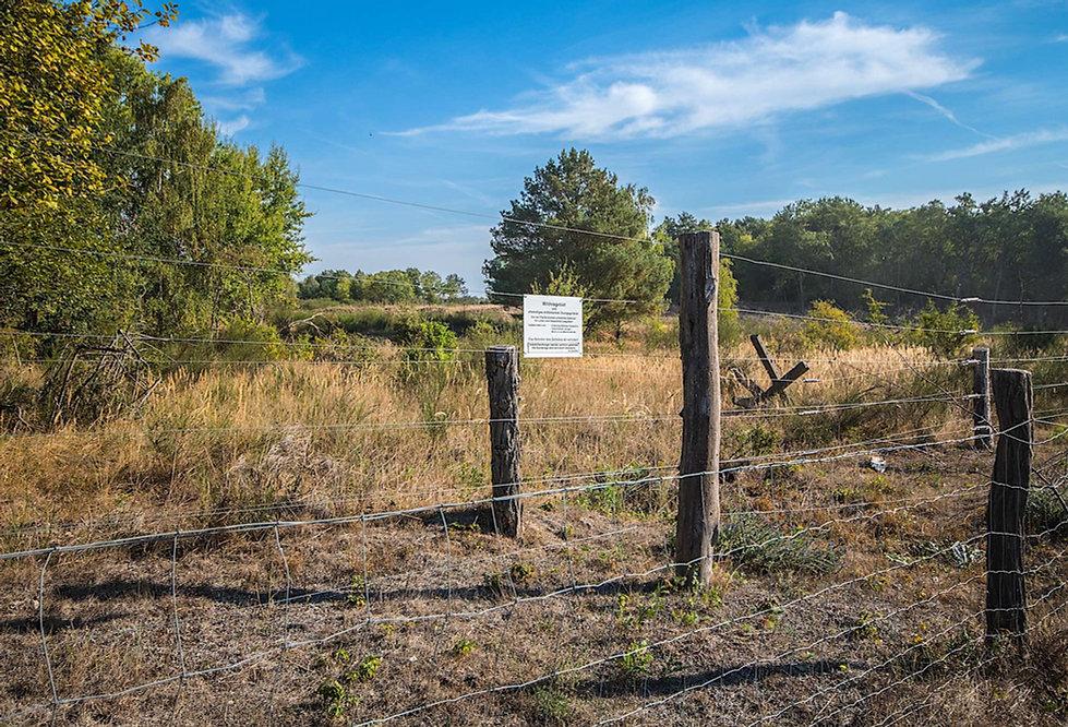 Hegn omkring vildnikernezonen i Döberitze Heide (foto: Rune Engelbreth Larsen)