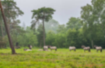 Den Danske Naturfond har opkøbt Bøtøskoven på Falster og sat vidheste ud (foto: Rune Engelbreth Larsen)
