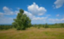 Tivilde Hegn ved Harehøje (foto: Rune Engelbreth Larsen)