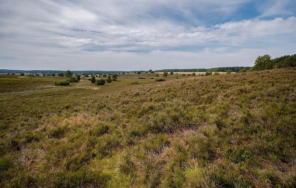 Lüneburge Heide (foto: Rune Engelbreth Larsen)