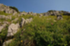 Jenner strækker sig 1.874 meter i vejret, og bjergtoppen er rig på smukke og sjældne blomster(foto © Rune Engelbreth Larsen).