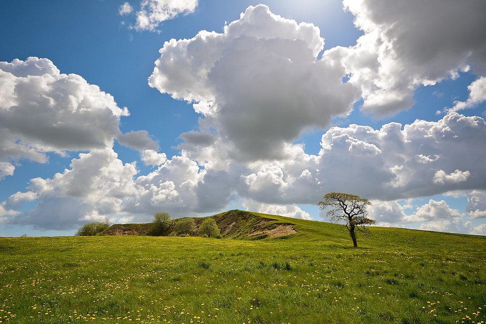 Resterne af Langballe Grusgrav, syd for Hørret Skov (foto: Rune Engelbreth Larsen)