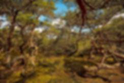 Troldeskovn, Tivilde Hegn. Urørt nåleskov (foto: Rune Engelbreth Larsen)