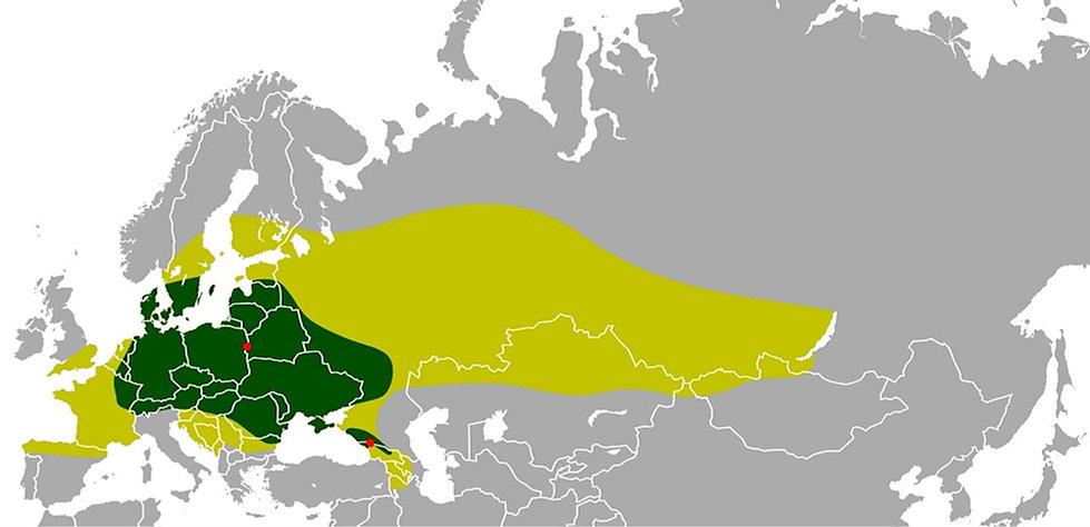 Historisk udbredelse af europæisk bison