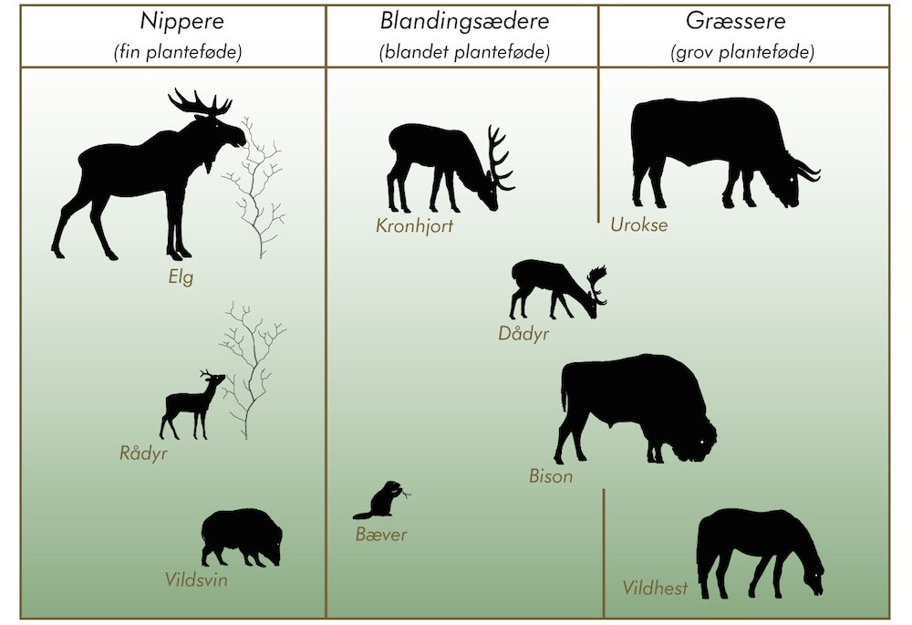 Forskellige planteædere har forskellig indvirkning på vegetationen og skaber stor variation (illustration © Karsten Thomsen)