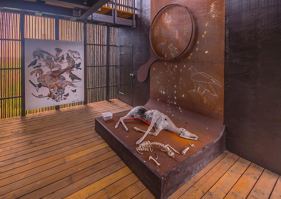 Døde dyr er vigtige for mange ådselædere (foto: Rune Engelbreth Larsen)