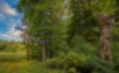 Ved Hundemose, Bidstrup Skovene (foto: Rune Engelbreth Larsen)