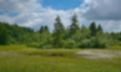 Smuldmose, Bidstrup Skovene (foto: Rune Engelbreth Larsen)