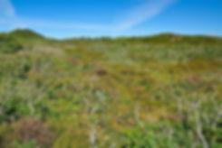 Løvklitter i Kærgård Klitplantage (foto: Rune Engelbreth Larsen)
