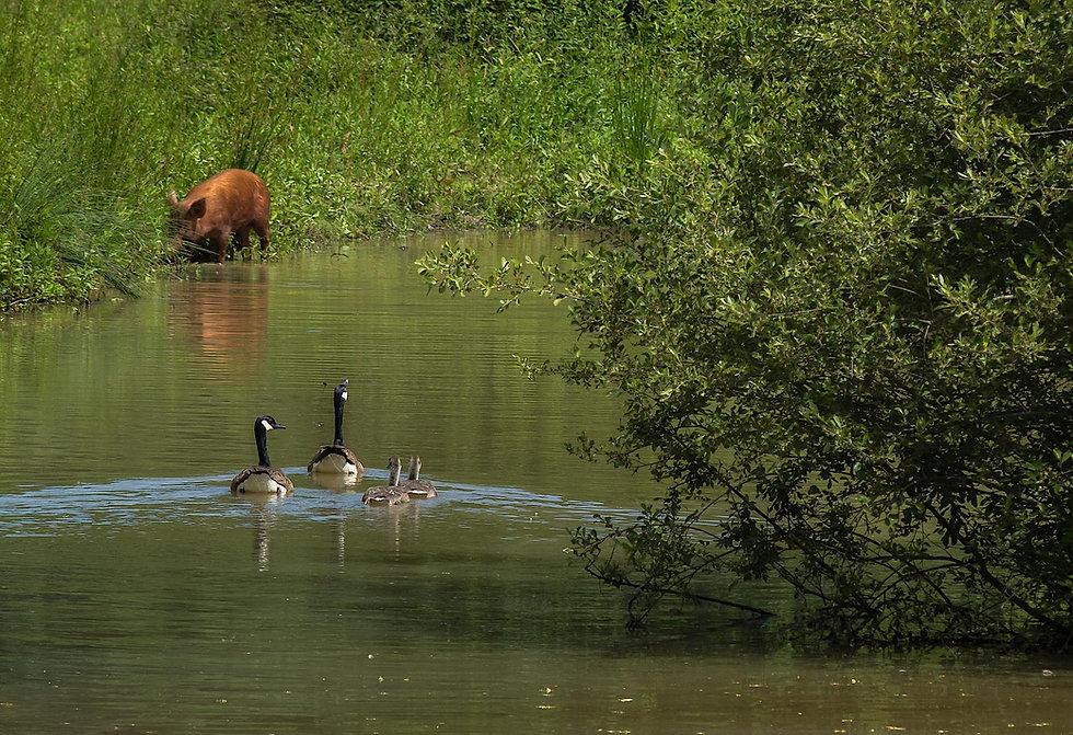 Knepp Wildland. Foto: Rune Engelbreth Larsen