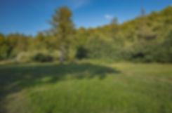 Kildeeng, Bidstrup Skovene (foto: Rune Engelbreth Larsen)