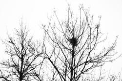 albero_21