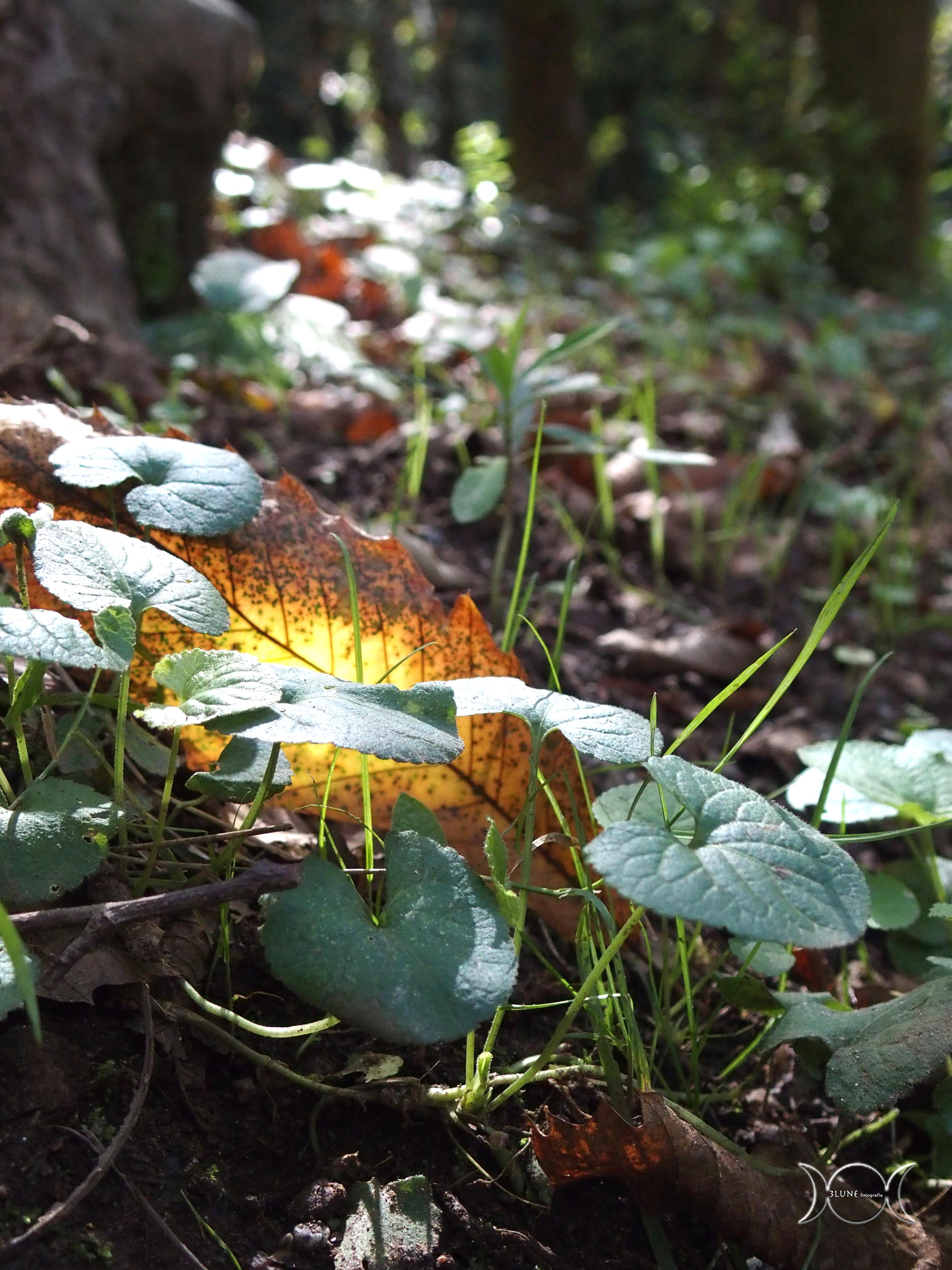 autunno sui colli san rizzo