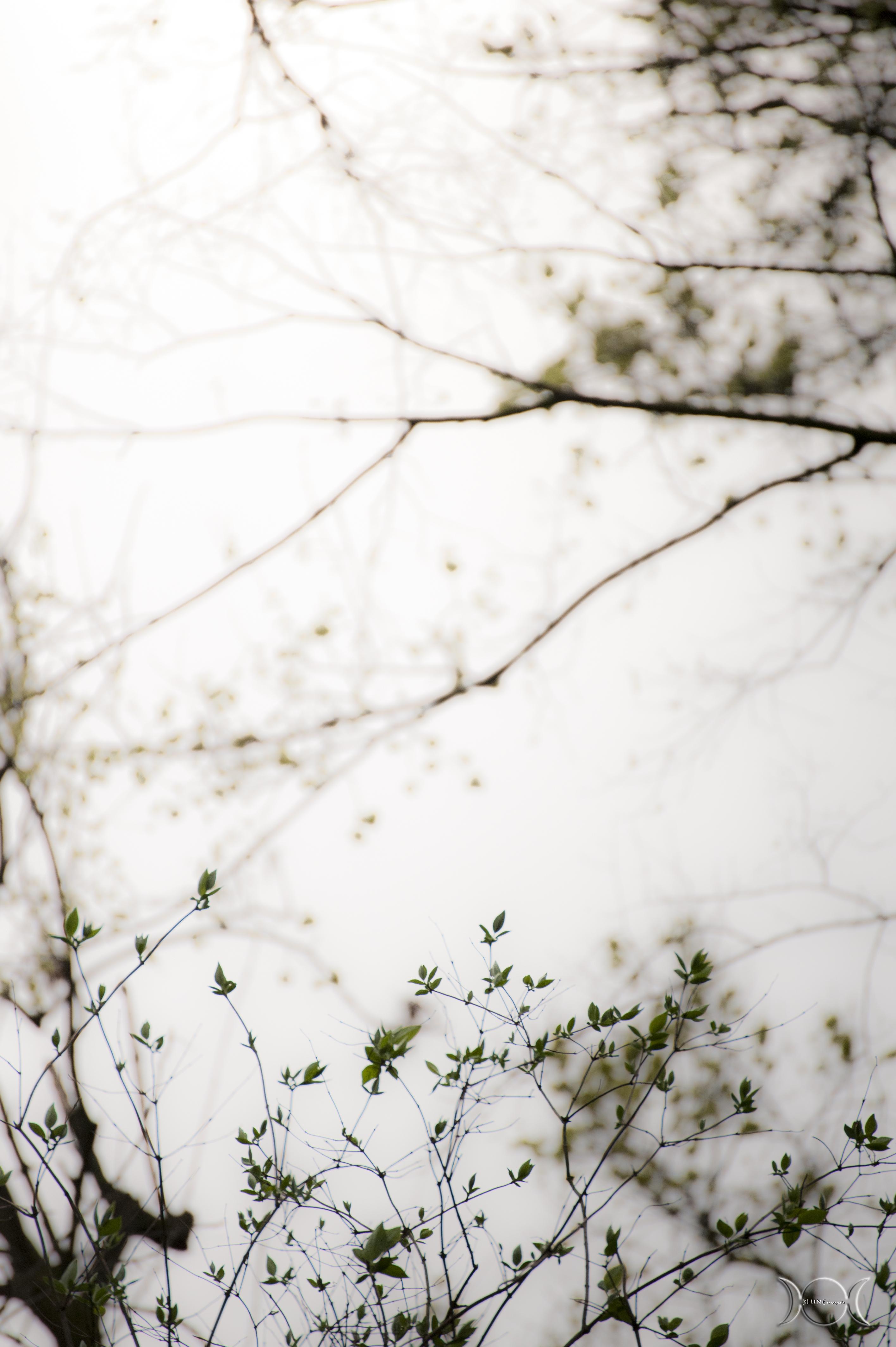albero_13