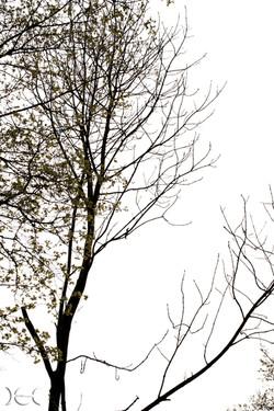 alberi13