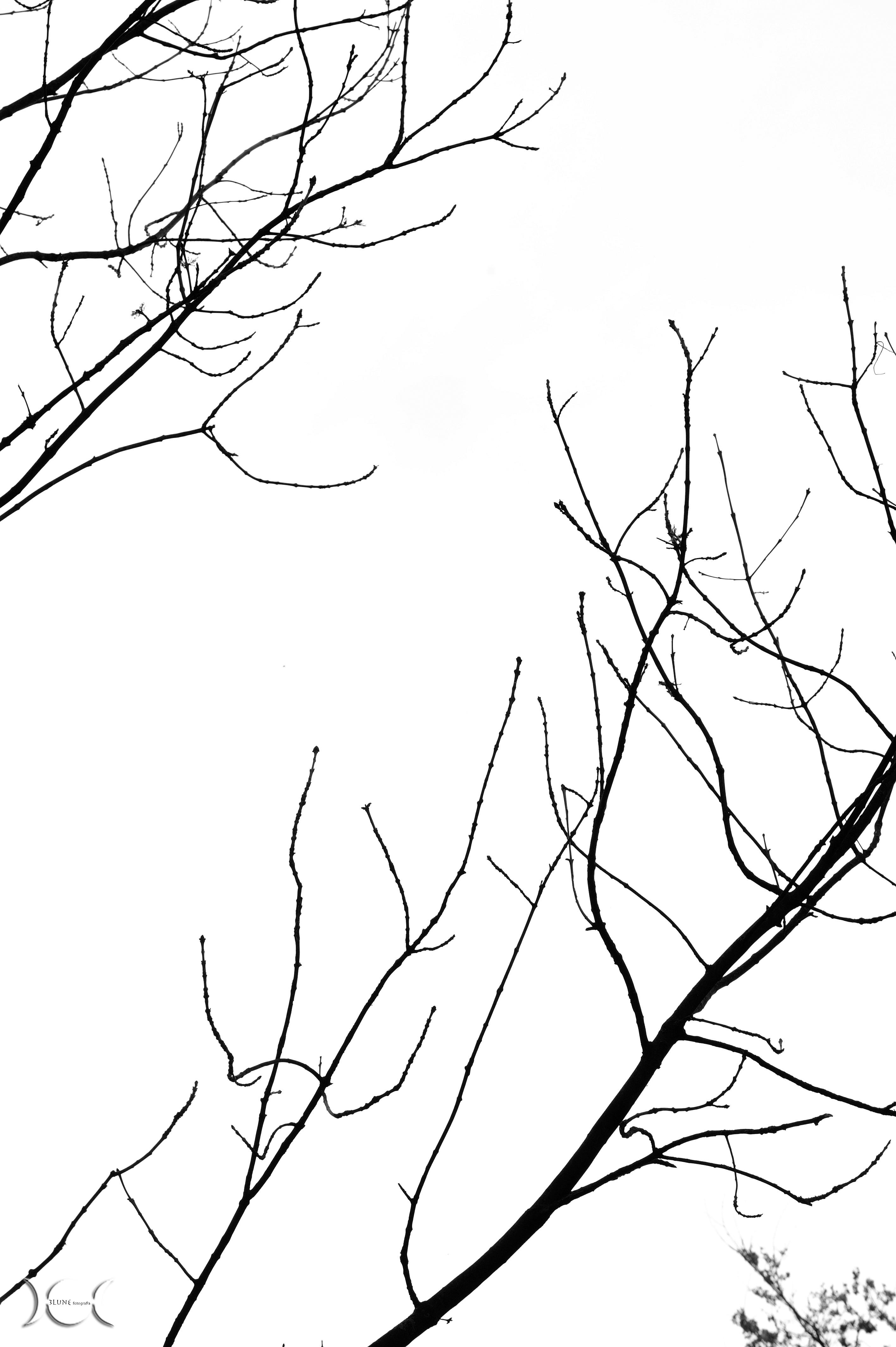 albero_14