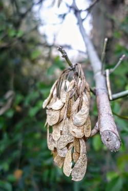 foliage basso emiliano